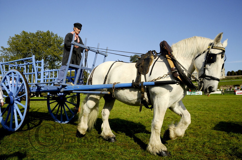 mondial.2011.percheron.90.JPG