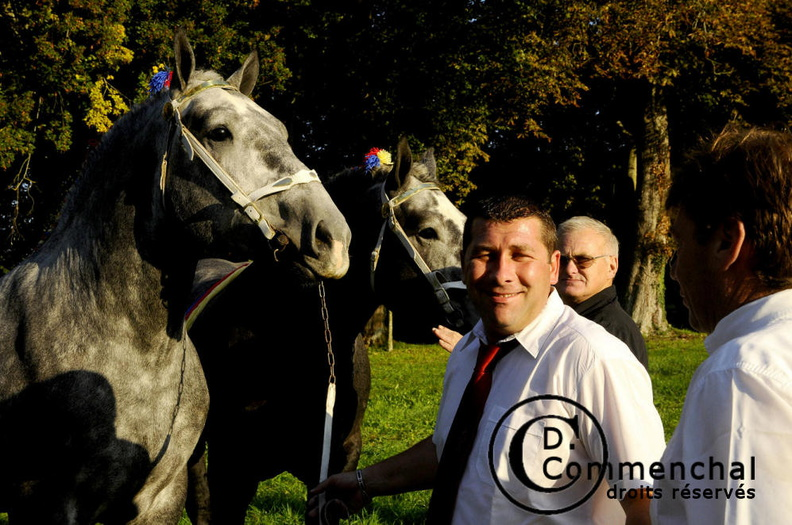 mondial.2011.percheron.47.JPG