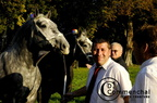 mondial.2011.percheron.47