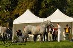 mondial.2011.percheron.55