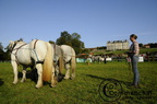 mondial.2011.percheron.74