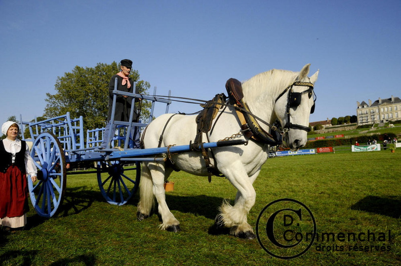mondial.2011.percheron.89.JPG