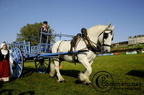mondial.2011.percheron.89