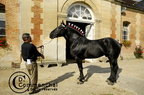 mondial.2011.percheron.122