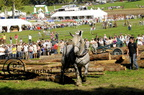 mondial.2011.percheron.130