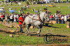 mondial.2011.percheron.140
