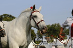 mondial.2011.percheron.199