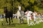 mondial.2011.percheron.201