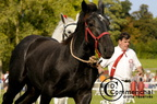 mondial.2011.percheron.202