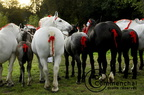 mondial.2011.percheron.240