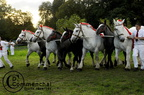 mondial.2011.percheron.241