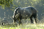 percheron.05.lefrancois.034