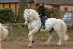 Haras du Pin Percheron
